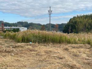 【掛川市】草刈り作業前