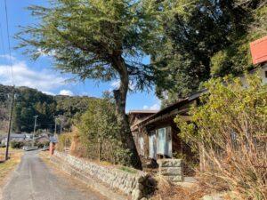 【掛川市】不用品回収と伐採、草刈り前