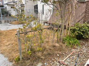 除去する庭木作業前