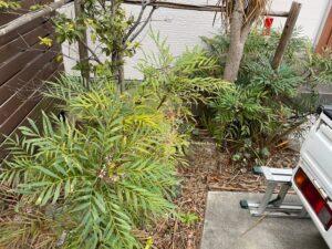 玄関横の除去する庭木作業前