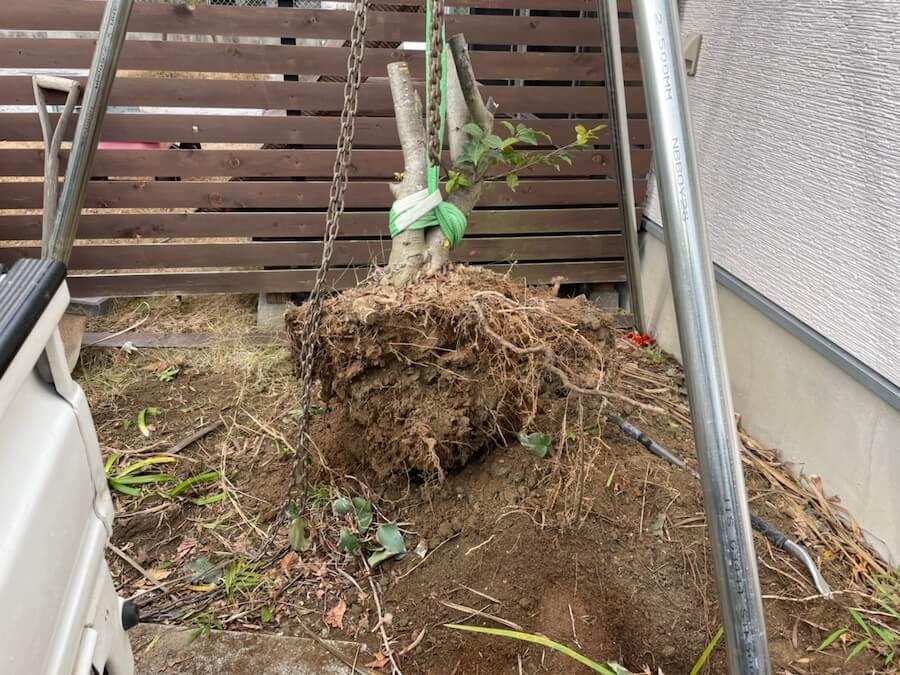 抜根した木の根