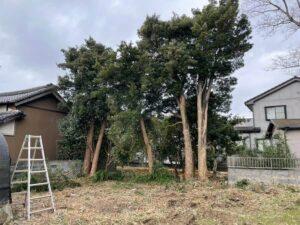 他の伐採する高木