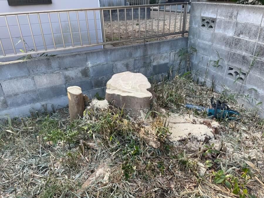 高木の伐採後の切り株