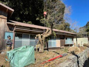 木の吊り上げ