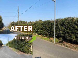 浜松市北区の生垣の剪定ビフォーアフター