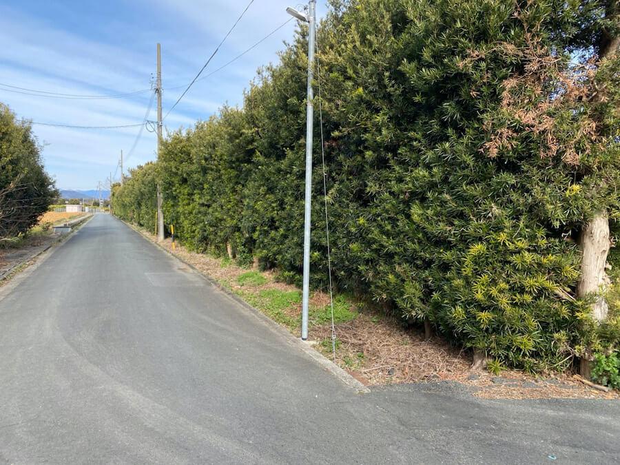 浜松市北区の生垣の強剪定
