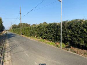 浜松市北区にある大きな生垣の剪定後