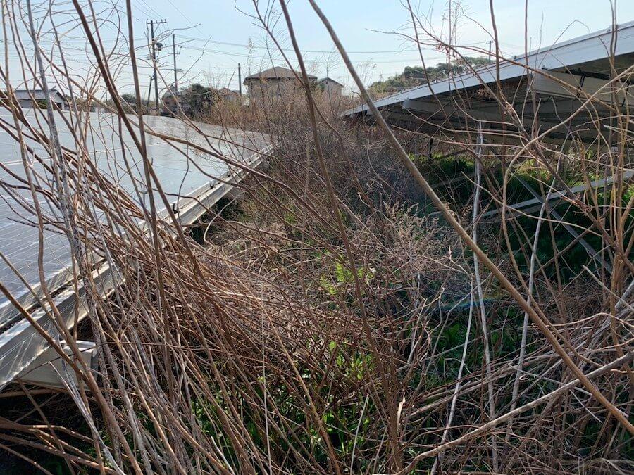 掛川市の太陽光ソーラーまわりの草刈り前