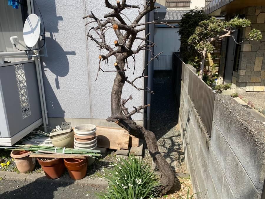 抜根する木の全体像