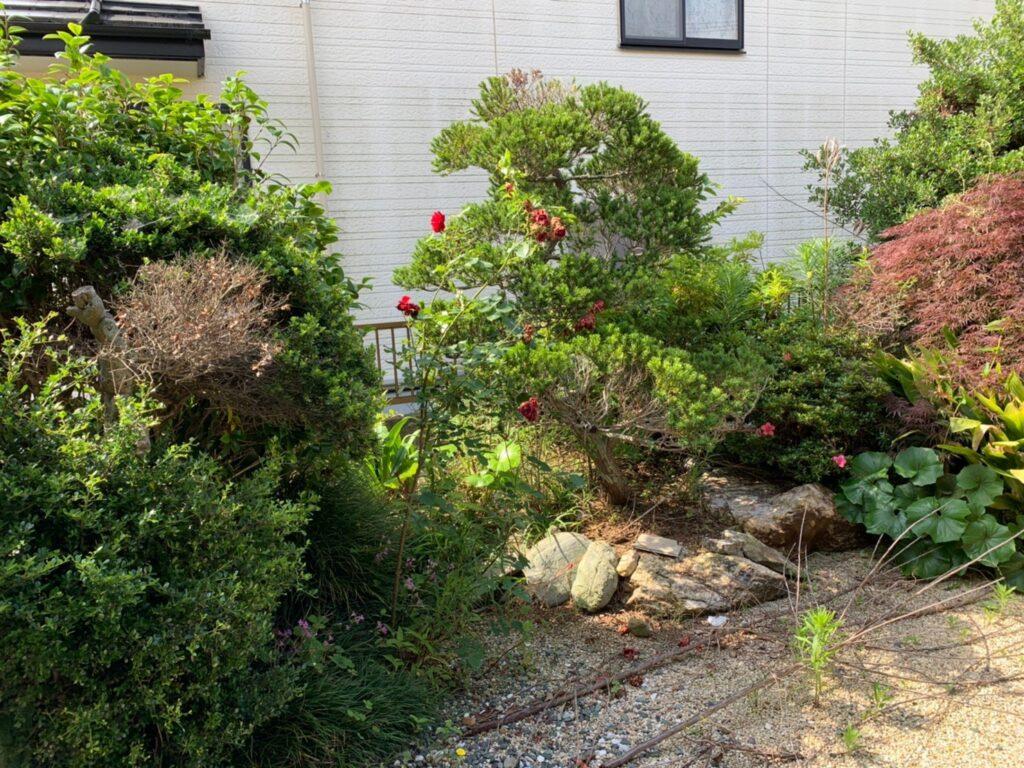 伐採前の庭