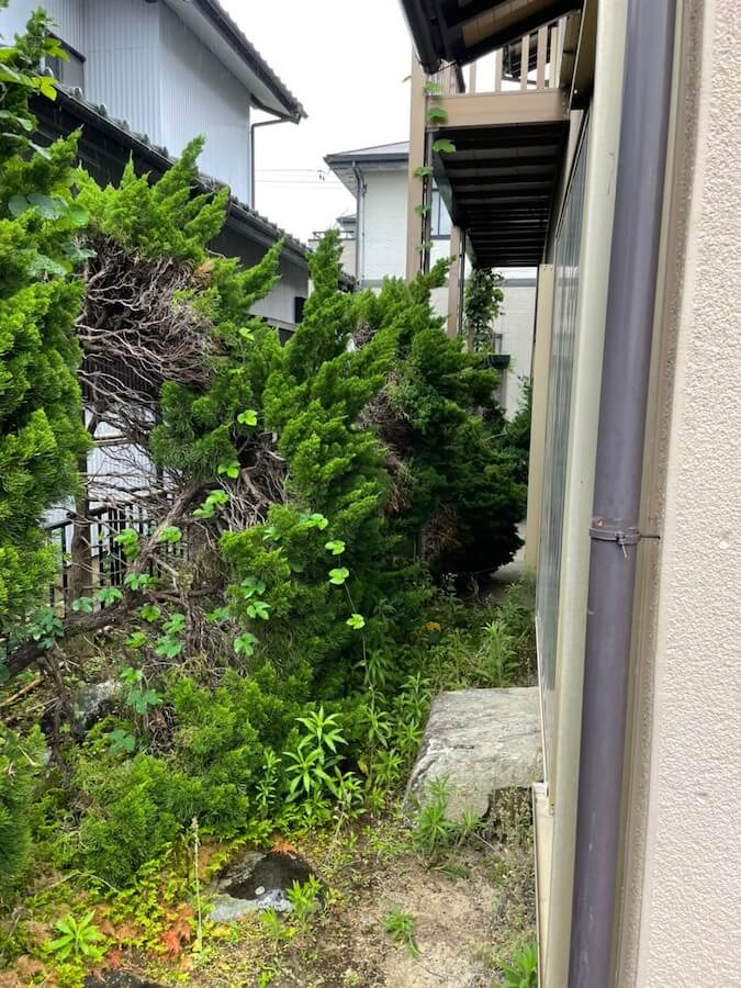 藤枝市の家の側面の木伐採前
