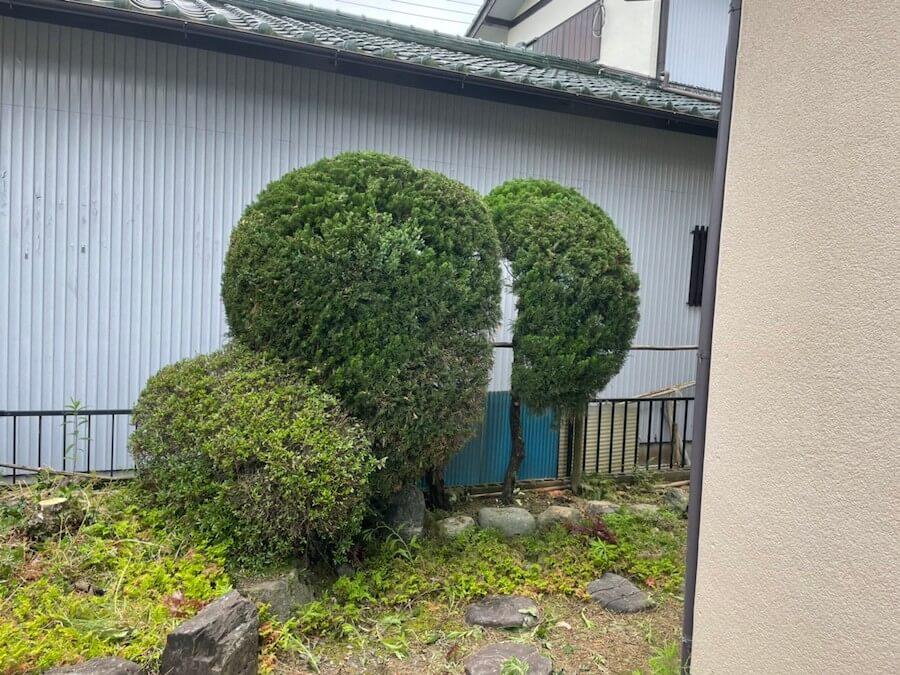 庭木の剪定後