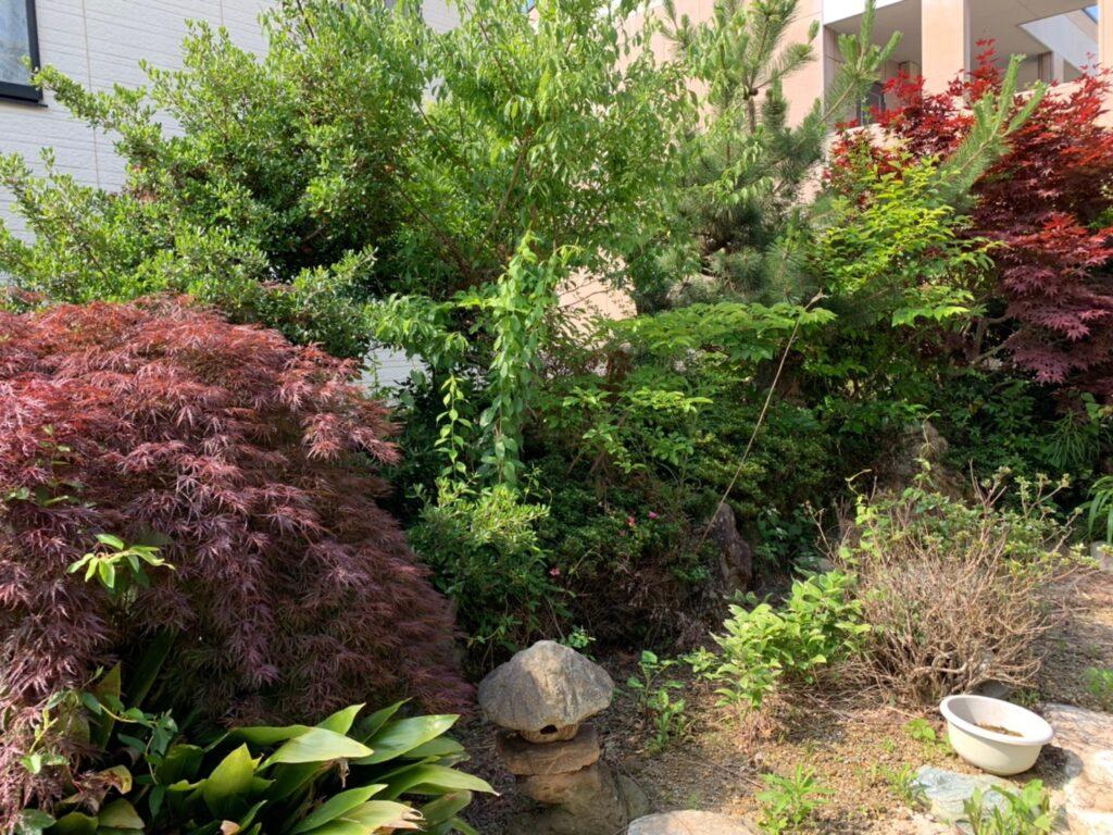 伐採前のお庭