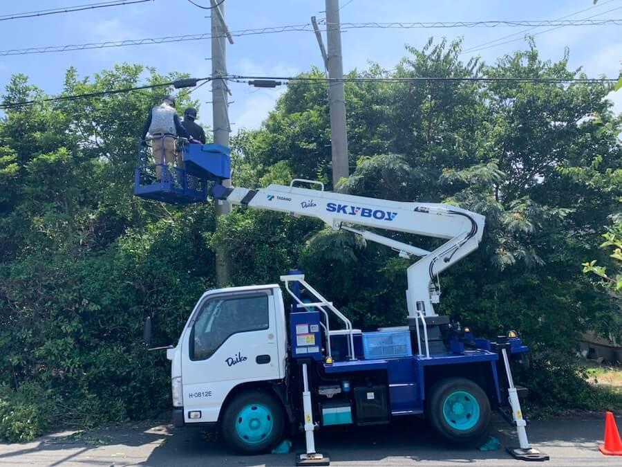 高所作業車を使ってまきの木を剪定