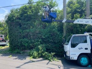 高所作業車を使ってまきの木を剪定02